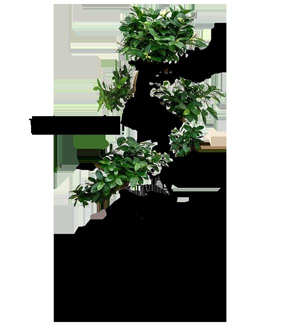 Ficus_by_Dennie_Soijo_tekentkopie